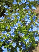 Giardino in fiore-12